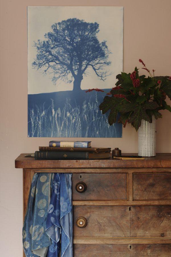 Blue Oak Cyanotype