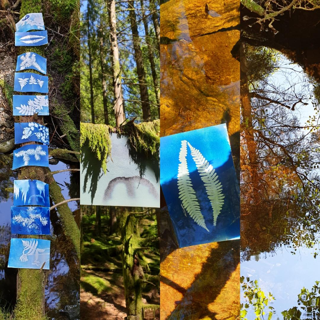 Cyanotypes made in the forest
